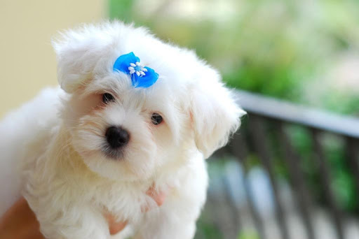 Cute puppys Wallpapers HD FREE
