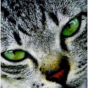 UCI name e  by ANdi Khoebill - Animals - Cats Portraits
