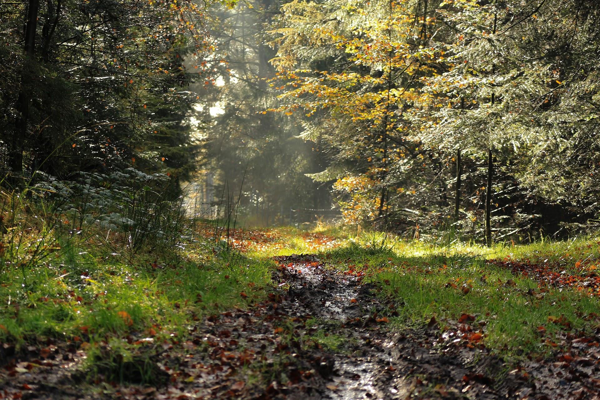 November skoven