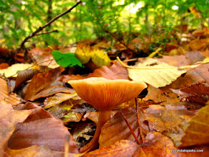 Photo: Mushroom at Gifford Woods State Park