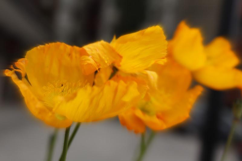 giallo sfocato di Naldina Fornasari