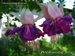 Photo: Brokwood Joy