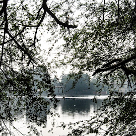 Santragaghi lake by Hrijul Dey - Nature Up Close Water ( reflection, sunset, trees, lake howrah birdless, landscape )