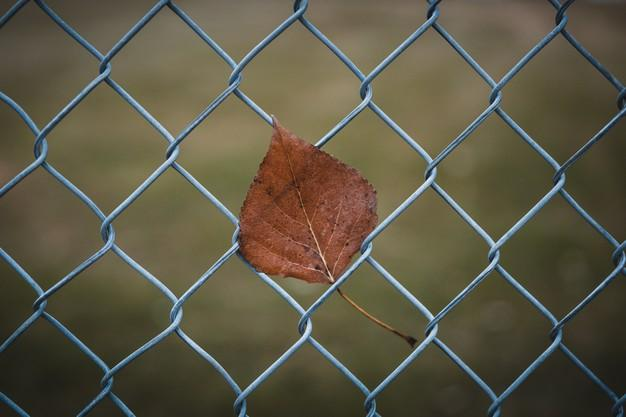 Closeup shot of a brown leaf on a chain link fence Free Photo
