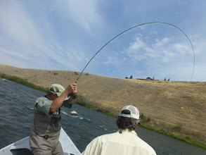 Photo: Dan Monfort fighting a fish on the Madison River in Montana