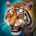Tiger HD Wallpapers Theme New Tab