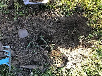 Influencia del tipo de suelo en el olivar