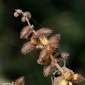 by Abdul Rehman - Nature Up Close Other plants (  )