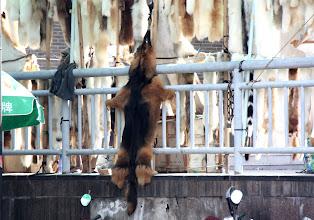 Photo: Day 188 - Animal Skins - Dog & Cat (We Think) (China)