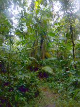 Photo: Rainforest trail, above Yellow House