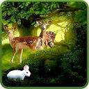 Forest Wallpaper HD Custom New Tab