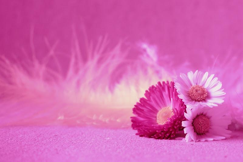 Semplicemente rosa di Furlissima