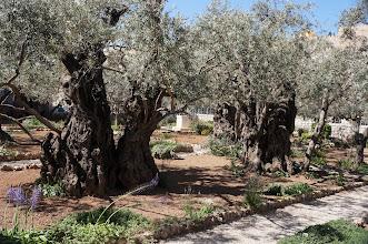 Photo: Garden of Gethsemane