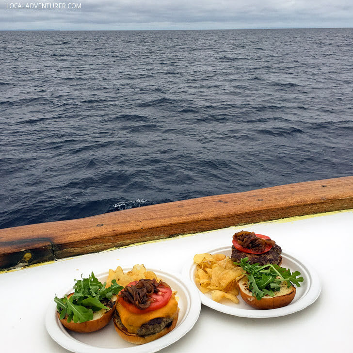 Included Lunch Out in the Ocean with Pacific Nature Tours.