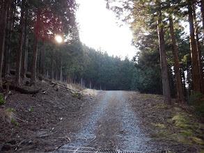 少しだけ林道歩き