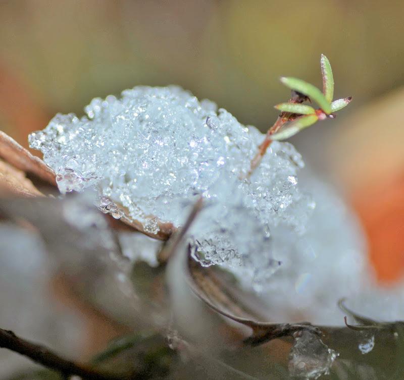 Nella morsa del ghiaccio di Loris Moratti