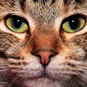 Mouser by Michael Cowan - Animals - Cats Portraits (  )