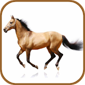 Horse Breeds Database