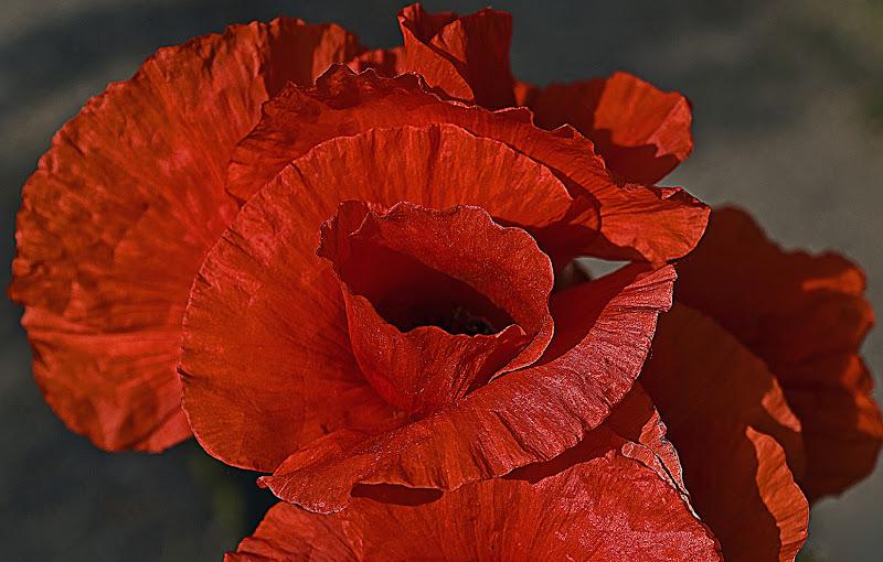 Red di carlo-bi