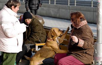 Photo: Menschen und ein Hund in der Kälte