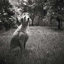 Photo: Jasmine on grass