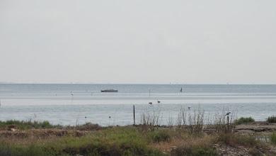 Photo: Flamingos offshore Deltebre lagoon