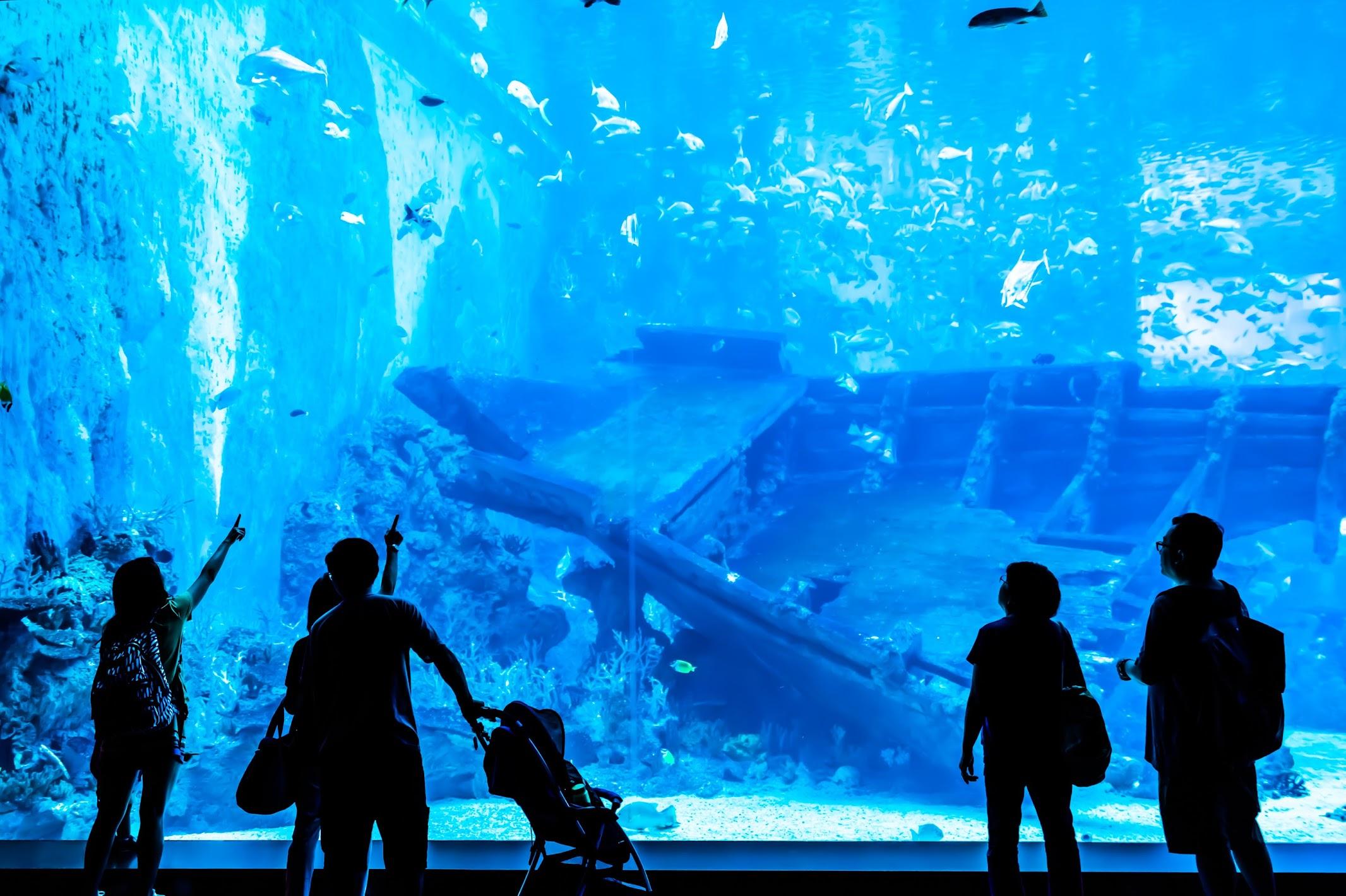 Singapore Sentosa S.E.A. Aquarium Shipwreck1