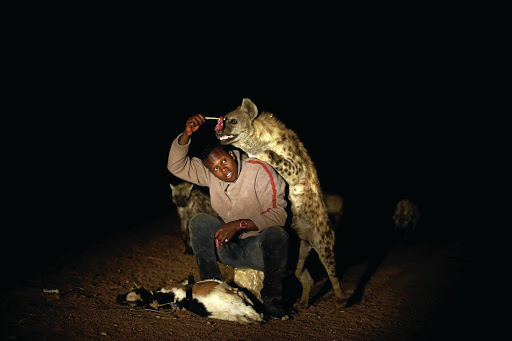 Snack attack: Abbas Yusuf, 23, feeds hyenas on the outskirts of the walled city of Harar. Picture: REUTERS