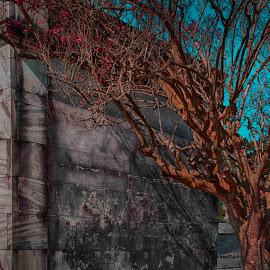by Tiffany Matt - City,  Street & Park  Cemeteries
