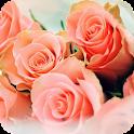 Peach Rose Live Wallpaper icon