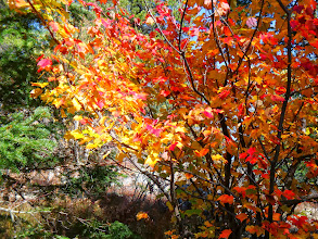 Photo: But the fall colours brought me back to an appreciation of the present.