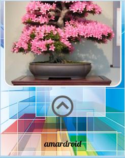 Bonsai Design - náhled