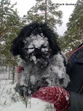 Photo: Snowface
