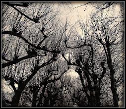 Photo: 26. november 2011 - Gisselfeld