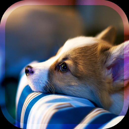 幸福的狗兒養育遊戲 3D 教育 App LOGO-APP開箱王