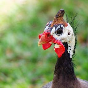 funny birds by Carolyn Lawson - Animals Birds