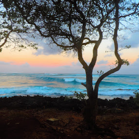 by Beverly Lee - Landscapes Sunsets & Sunrises ( water, palm tree, sunset, turtle bay, beach, sunrise, hawaii,  )