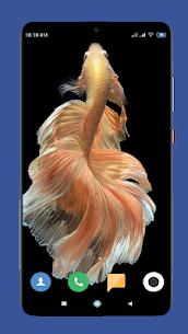 Betta Fish Wallpaper HD 1