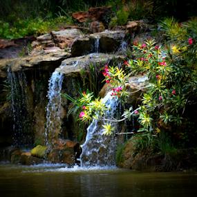 Falls at Terrel by Rhonda Kay - Nature Up Close Water (  )