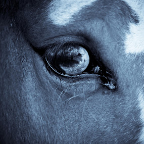 For Becka Chapman by Norma Evans - Animals Horses