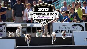 2013 Incredible Dog Challenge thumbnail