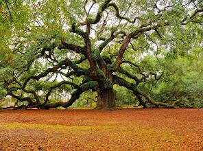 Photo: 1500 year old 'Angel Oak' in Charleston, South Carolina - What an amazing photo