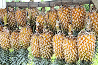 Photo: Pigūs pakaruokliai ananasai šalia kelio.  Cheap hanging pineapples next to the main road.