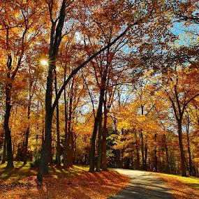 by Adam Snyder - Landscapes Forests (  )