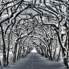 mysterious allè by Jan Myhrehagen - Nature Up Close Trees & Bushes