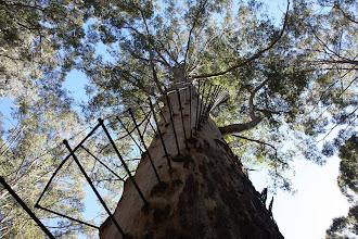 Photo: Gloucester Tree