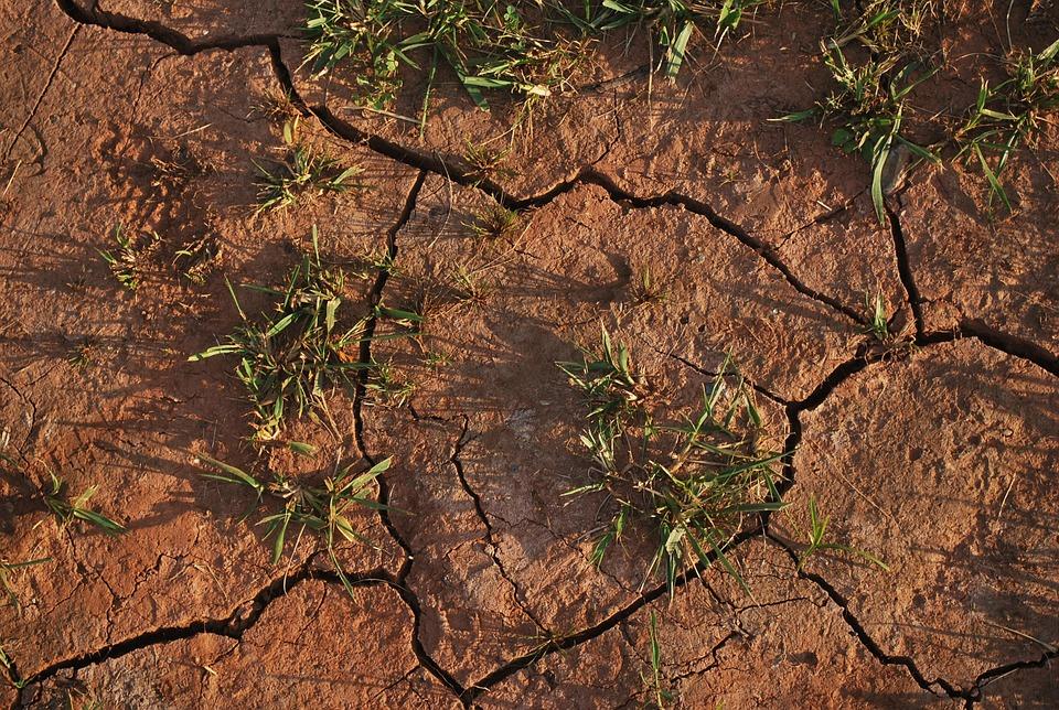 soil-15540_960_720.jpg