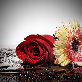 COUPLES TYPE         by WanUkay Perdana - Nature Up Close Flowers - 2011-2013