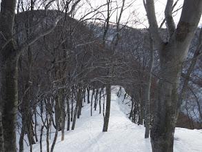スキー跡を辿る