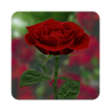 3D Rose Live Wallpaper icon